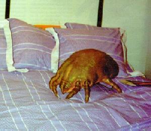 Сон клещи во всем теле